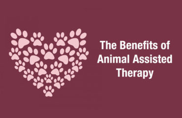 animal assisted therapy near me in southfield mi